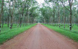 Chuyển đổi đất trồng cây lâu năm lên thổ cư